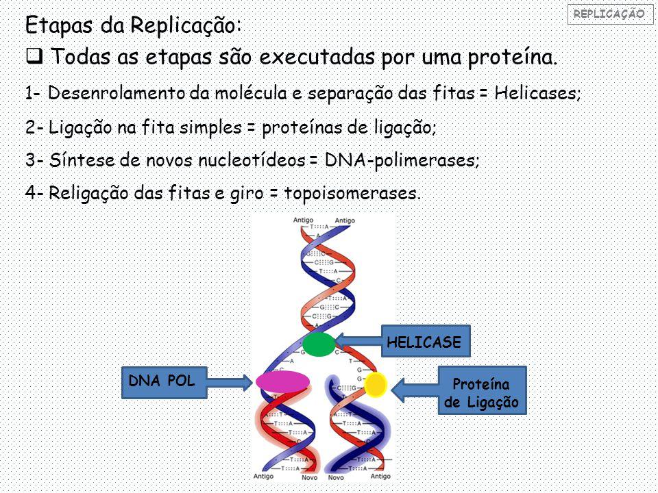 Etapas da Replicação:  Todas as etapas são executadas por uma proteína.