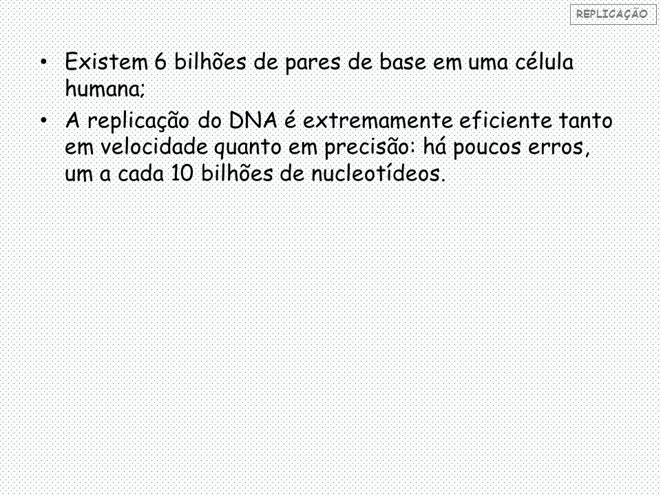 Existem 6 bilhões de pares de base em uma célula humana; A replicação do DNA é extremamente eficiente tanto em velocidade quanto em precisão: há poucos erros, um a cada 10 bilhões de nucleotídeos.