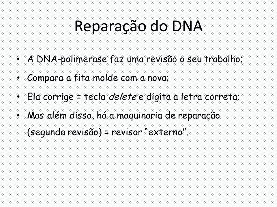 Reparação do DNA A DNA-polimerase faz uma revisão o seu trabalho; Compara a fita molde com a nova; Ela corrige = tecla delete e digita a letra correta; Mas além disso, há a maquinaria de reparação (segunda revisão) = revisor externo .