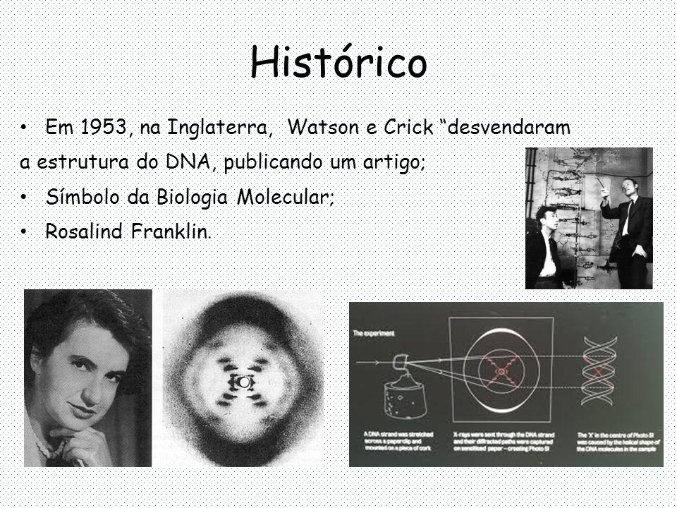 Histórico Em 1953, na Inglaterra, Watson e Crick desvendaram a estrutura do DNA, publicando um artigo; Símbolo da Biologia Molecular; Rosalind Franklin.