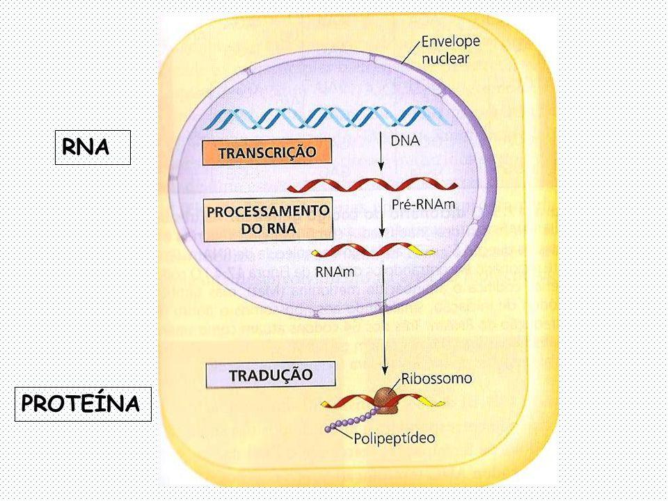 RNA PROTEÍNA