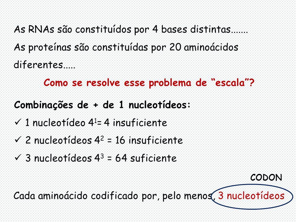 As RNAs são constituídos por 4 bases distintas.......