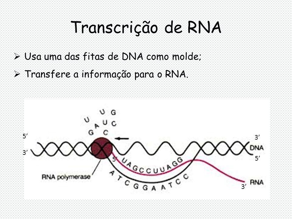 Transcrição de RNA  Usa uma das fitas de DNA como molde;  Transfere a informação para o RNA.