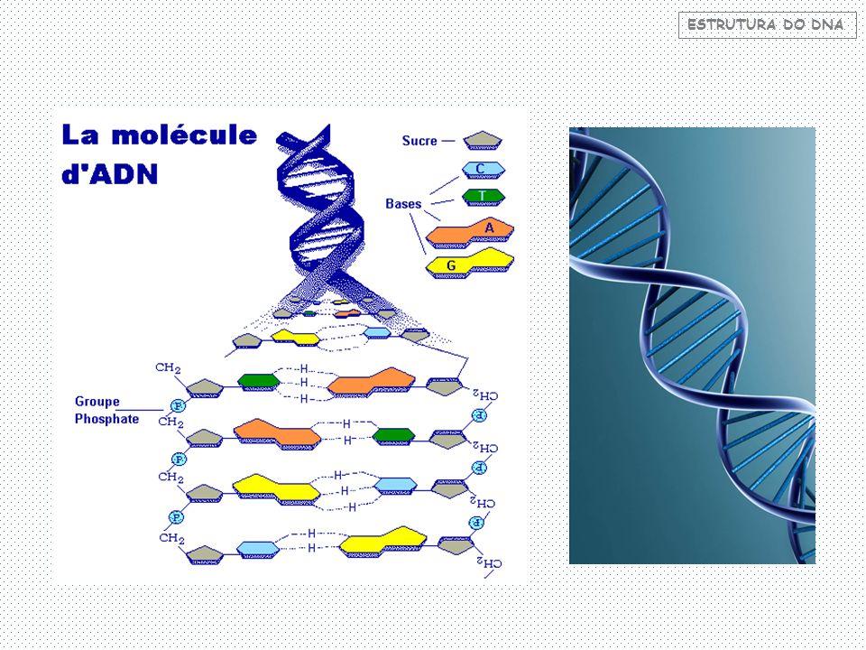 Toda informação do indivíduo está no DNA.