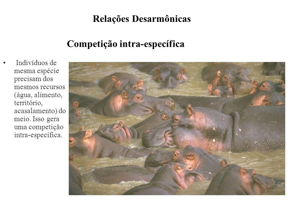 Competição intra-específica Indivíduos de mesma espécie precisam dos mesmos recursos (água, alimento, território, acasalamento) do meio. Isso gera uma