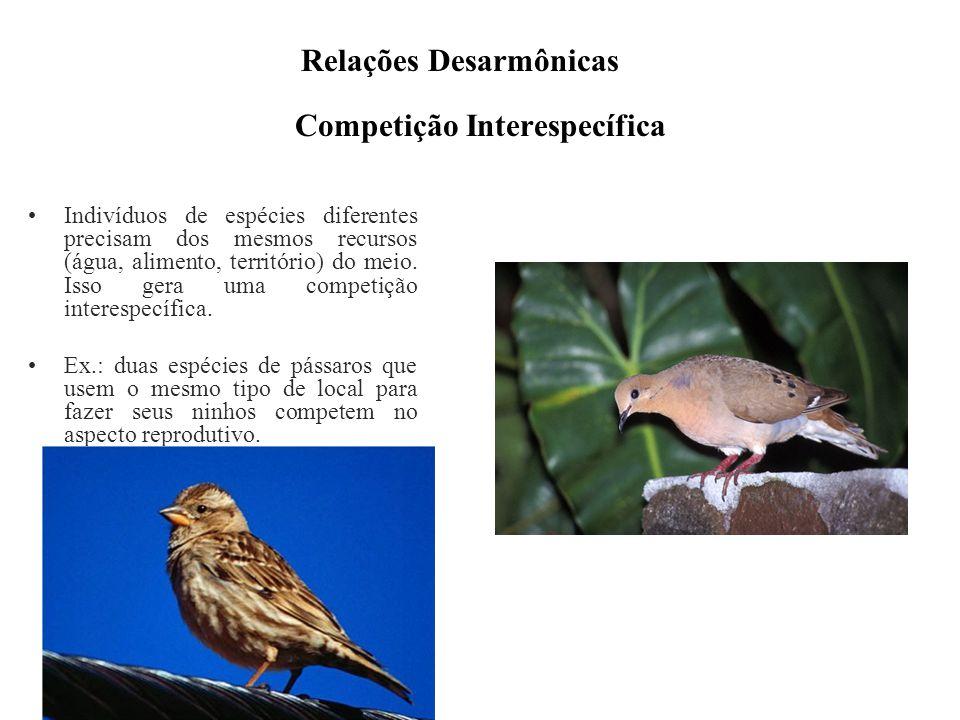 Competição Interespecífica Indivíduos de espécies diferentes precisam dos mesmos recursos (água, alimento, território) do meio. Isso gera uma competiç