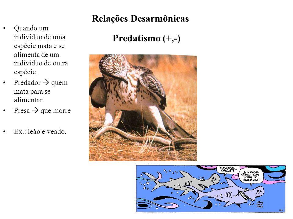 Predatismo (+,-) Quando um indivíduo de uma espécie mata e se alimenta de um individuo de outra espécie. Predador  quem mata para se alimentar Presa