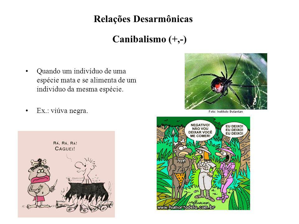 Canibalismo (+,-) Quando um indivíduo de uma espécie mata e se alimenta de um individuo da mesma espécie. Ex.: viúva negra. Relações Desarmônicas