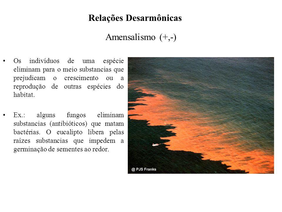 Amensalismo (+,-) Os indivíduos de uma espécie eliminam para o meio substancias que prejudicam o crescimento ou a reprodução de outras espécies do hab