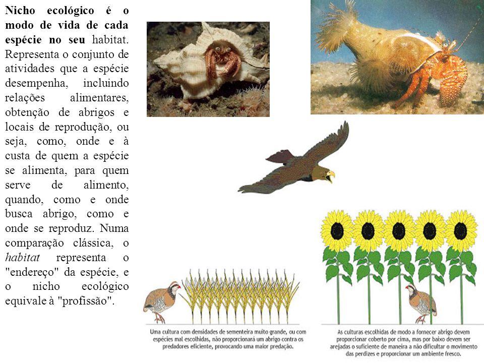 Nicho ecológico é o modo de vida de cada espécie no seu habitat. Representa o conjunto de atividades que a espécie desempenha, incluindo relações alim