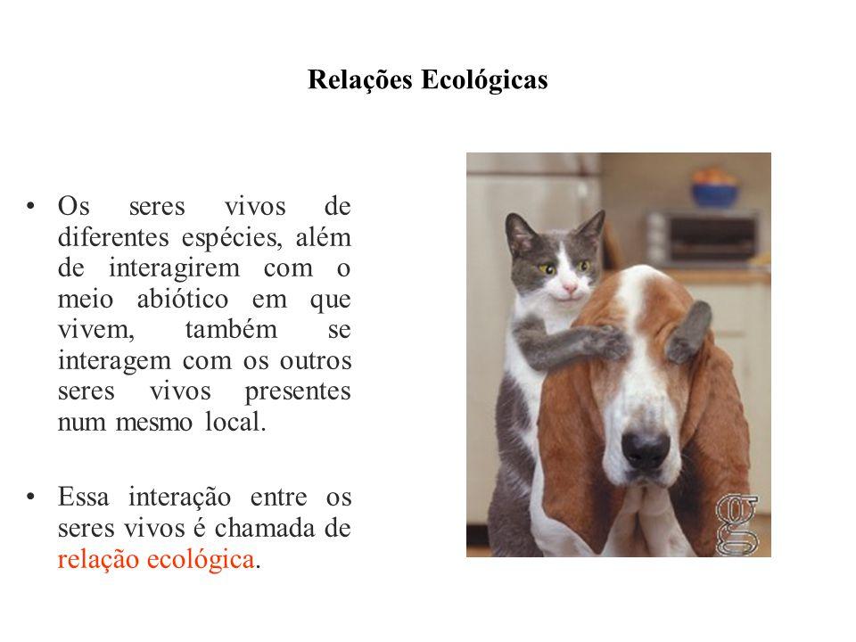 Relações Ecológicas Os seres vivos de diferentes espécies, além de interagirem com o meio abiótico em que vivem, também se interagem com os outros ser