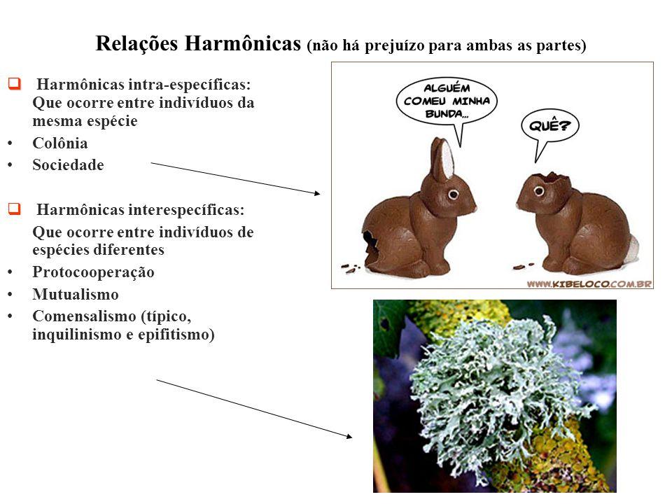 Relações Harmônicas (não há prejuízo para ambas as partes)   Harmônicas intra-específicas: Que ocorre entre indivíduos da mesma espécie Colônia Soci