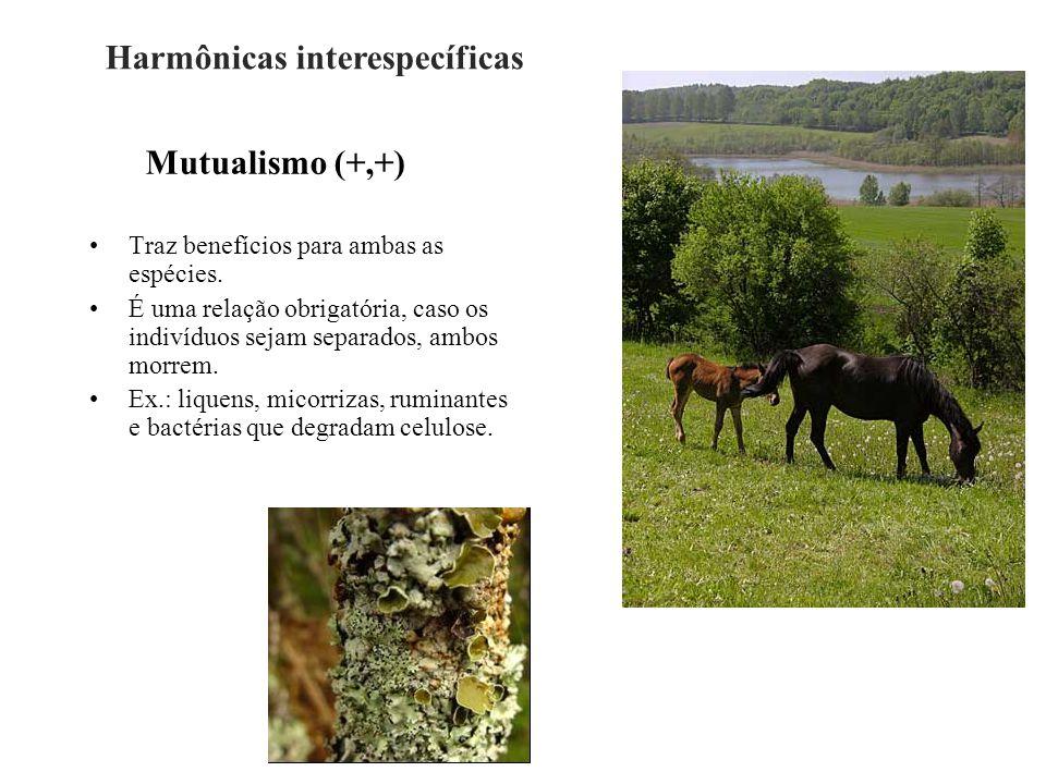 Mutualismo (+,+) Traz benefícios para ambas as espécies. É uma relação obrigatória, caso os indivíduos sejam separados, ambos morrem. Ex.: liquens, mi