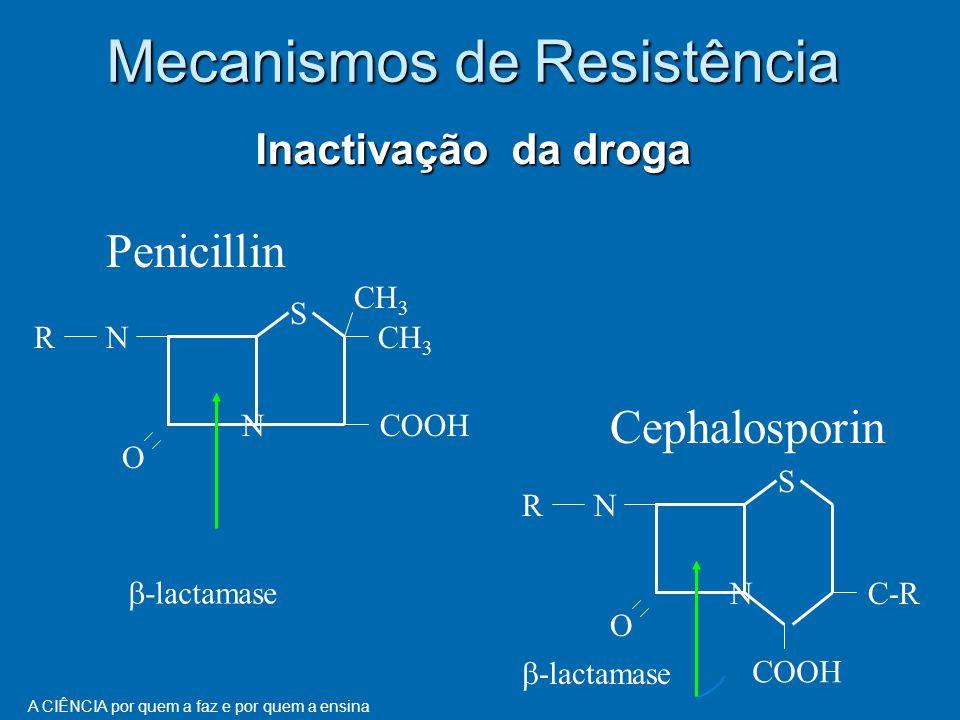 A CIÊNCIA por quem a faz e por quem a ensina Inactivação da droga Mecanismos de Resistência S N O NR CH 3 COOH Penicillin S N O NR C-R COOH Cephalosporin  -lactamase
