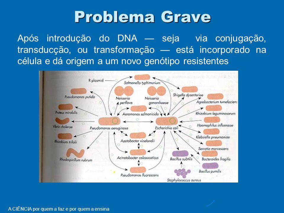 A CIÊNCIA por quem a faz e por quem a ensina Problema Grave Após introdução do DNA — seja via conjugação, transducção, ou transformação — está incorporado na célula e dá origem a um novo genótipo resistentes