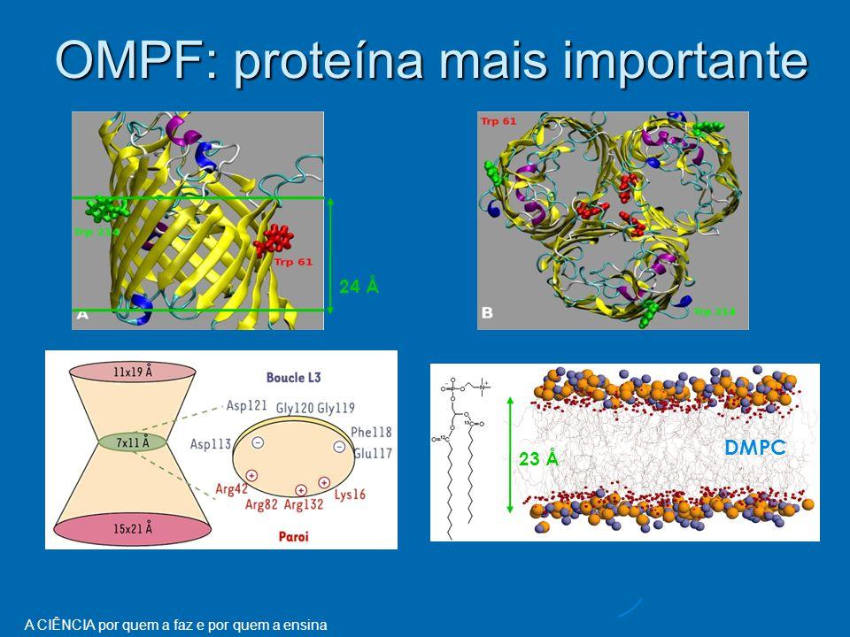 A CIÊNCIA por quem a faz e por quem a ensina 24 Å 23 Å DMPC OMPF: proteína mais importante