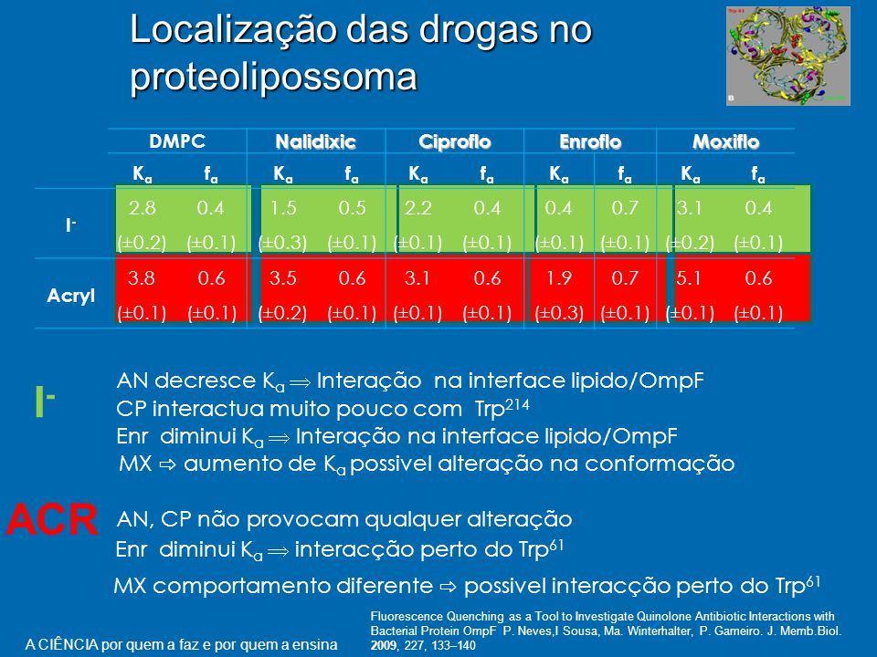 Localização das drogas no proteolipossoma DMPCNalidixicCiprofloEnrofloMoxiflo KaKa fafa KaKa fafa KaKa fafa KaKa fafa KaKa fafa I-I- 2.80.41.50.52.2 0.4 0.73.10.4 (±0.2)(±0.1)(±0.3)(±0.1) (±0.2)(±0.1) Acryl 3.80.63.50.63.1 0.6 1.90.75.10.6 (±0.1) (±0.2)(±0.1) (±0.3)(±0.1) MX ⇨ aumento de K a possivel alteração na conformação MX comportamento diferente ⇨ possivel interacção perto do Trp 61 I-I- ACR AN decresce K a  Interação na interface lipido/OmpF CP interactua muito pouco com Trp 214 Enr diminui K a  Interação na interface lipido/OmpF AN, CP não provocam qualquer alteração Enr diminui K a  interacção perto do Trp 61 Fluorescence Quenching as a Tool to Investigate Quinolone Antibiotic Interactions with Bacterial Protein OmpF P.