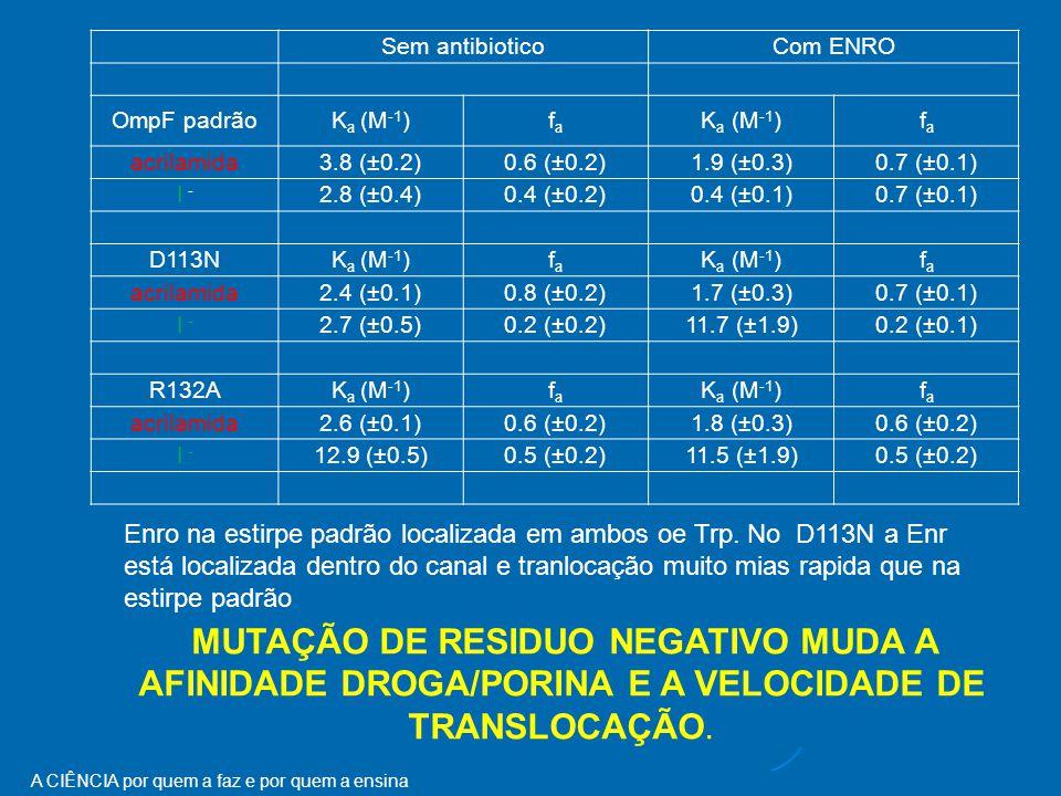 A CIÊNCIA por quem a faz e por quem a ensina Sem antibiotico Com ENRO OmpF padrãoK a (M -1 )fafa fafa acrilamida3.8 (±0.2)0.6 (±0.2)1.9 (±0.3)0.7 (±0.1) I -I - 2.8 (±0.4)0.4 (±0.2)0.4 (±0.1)0.7 (±0.1) D113NK a (M -1 )fafa fafa acrilamida2.4 (±0.1)0.8 (±0.2)1.7 (±0.3)0.7 (±0.1) I - 2.7 (±0.5)0.2 (±0.2)11.7 (±1.9)0.2 (±0.1) R132AK a (M -1 )fafa fafa acrilamida2.6 (±0.1)0.6 (±0.2)1.8 (±0.3)0.6 (±0.2) I - 12.9 (±0.5)0.5 (±0.2)11.5 (±1.9)0.5 (±0.2) MUTAÇÃO DE RESIDUO NEGATIVO MUDA A AFINIDADE DROGA/PORINA E A VELOCIDADE DE TRANSLOCAÇÃO.