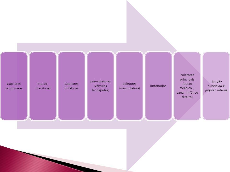 Capilares sanguíneos Fluido intersticial Capilares linfáticos pré-coletores (válvulas bicúspides) coletores (musculatura) linfonodos coletores princip