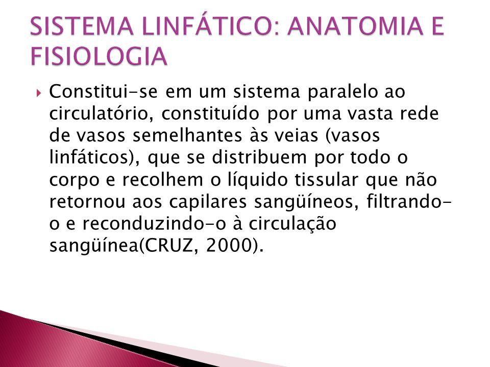  Constitui-se em um sistema paralelo ao circulatório, constituído por uma vasta rede de vasos semelhantes às veias (vasos linfáticos), que se distrib