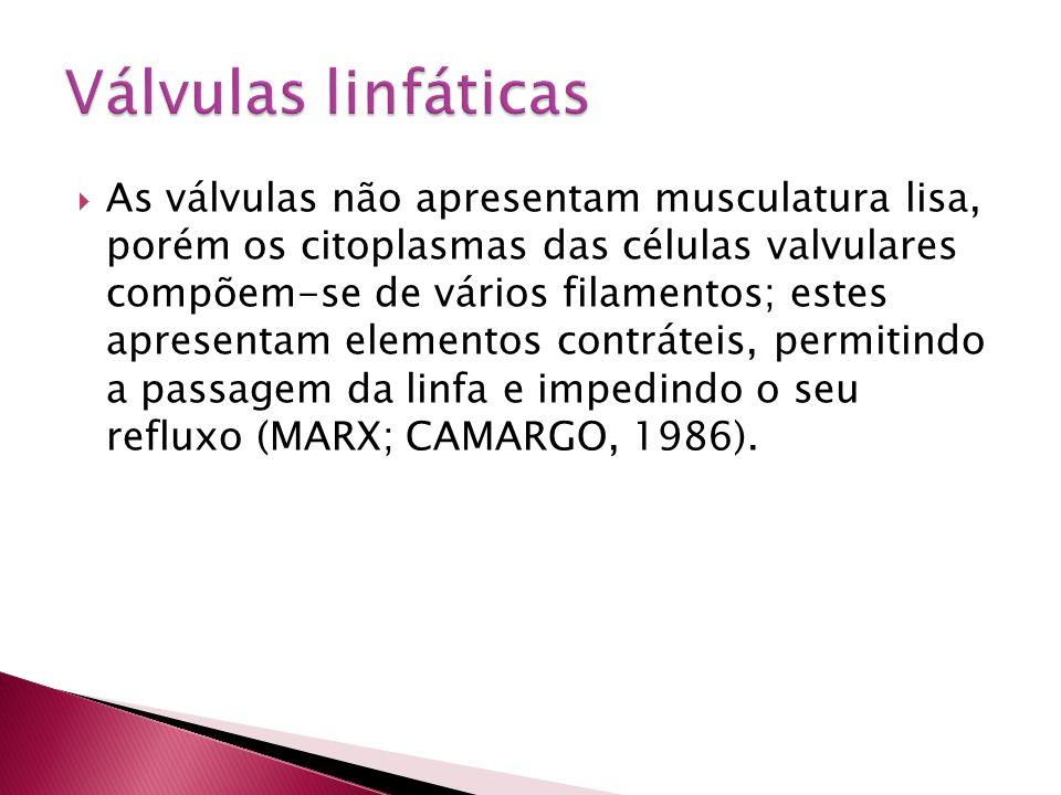  As válvulas não apresentam musculatura lisa, porém os citoplasmas das células valvulares compõem-se de vários filamentos; estes apresentam elementos
