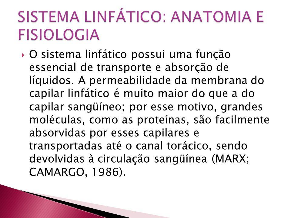  O sistema linfático possui uma função essencial de transporte e absorção de líquidos. A permeabilidade da membrana do capilar linfático é muito maio