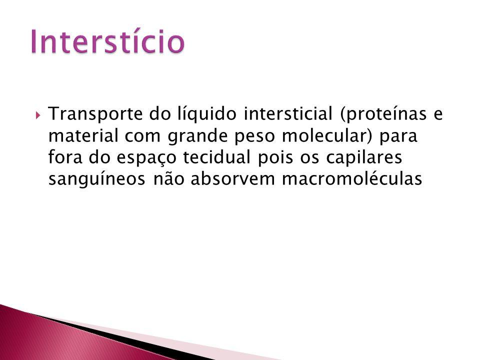  Transporte do líquido intersticial (proteínas e material com grande peso molecular) para fora do espaço tecidual pois os capilares sanguíneos não ab