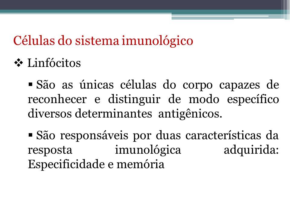 Células do sistema imunológico  Linfócitos  Linfócitos inativos são as células que ainda não foram estimuladas por antígenos.