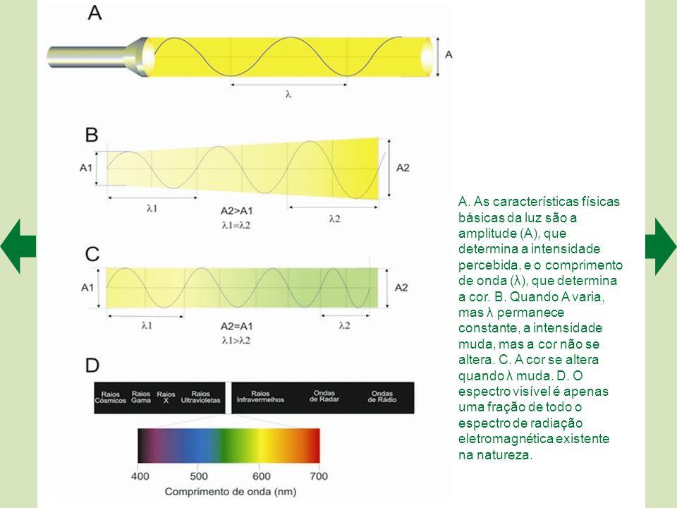 Clique nas setas verdes para avançar/voltar ou ESC para retornar ao menu geral PARTE 2 Neurociência Sensorial Capítulo 9 Visão das Coisas Estrutura e