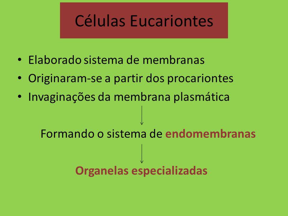 Células Eucariontes Elaborado sistema de membranas Originaram-se a partir dos procariontes Invaginações da membrana plasmática Formando o sistema de e