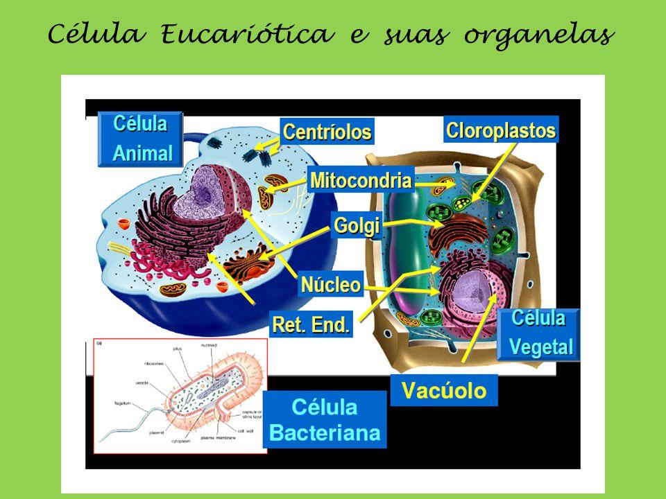 Célula Eucariótica e suas organelas