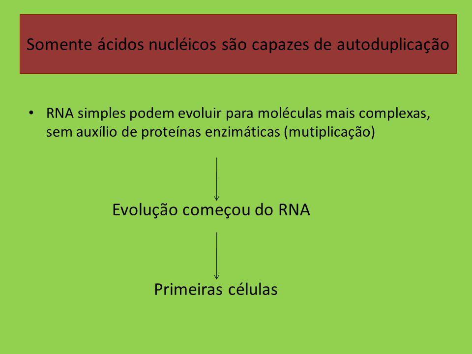 Somente ácidos nucléicos são capazes de autoduplicação RNA simples podem evoluir para moléculas mais complexas, sem auxílio de proteínas enzimáticas (