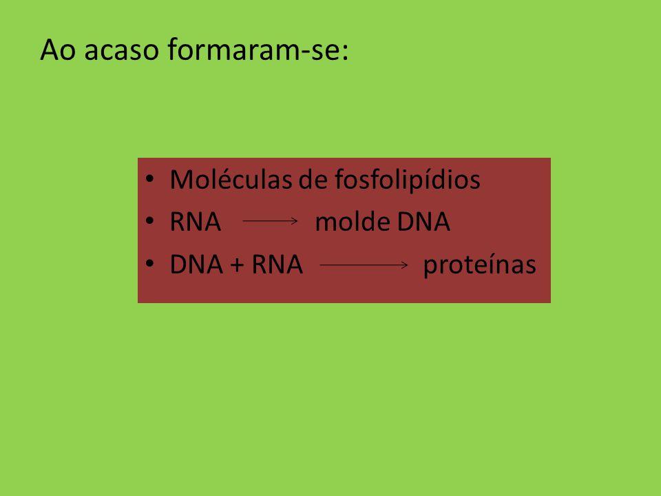 Ao acaso formaram-se: Moléculas de fosfolipídios RNA molde DNA DNA + RNA proteínas