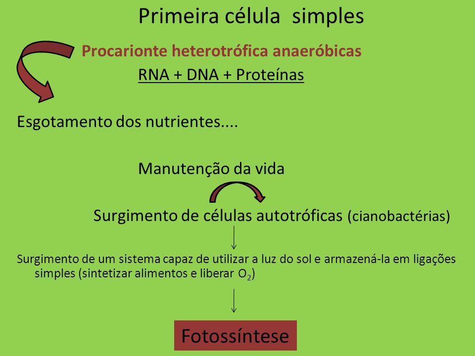 Primeira célula simples Procarionte heterotrófica anaeróbicas RNA + DNA + Proteínas Esgotamento dos nutrientes.... Manutenção da vida Surgimento de cé