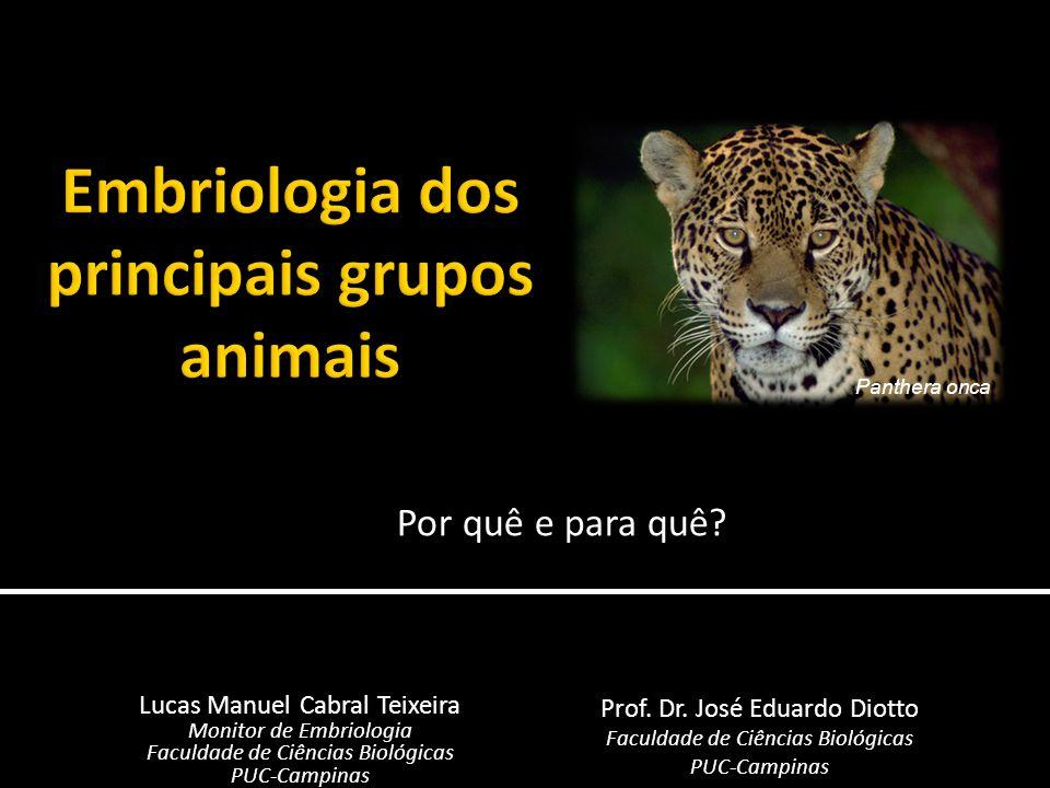 Por quê e para quê? Lucas Manuel Cabral Teixeira Monitor de Embriologia Faculdade de Ciências Biológicas PUC-Campinas Prof. Dr. José Eduardo Diotto Fa