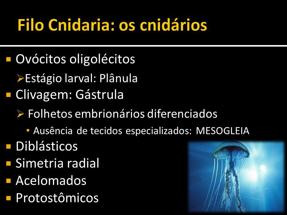  Ovócitos oligolécitos  Estágio larval: Plânula  Clivagem: Gástrula  Folhetos embrionários diferenciados Ausência de tecidos especializados: MESOG