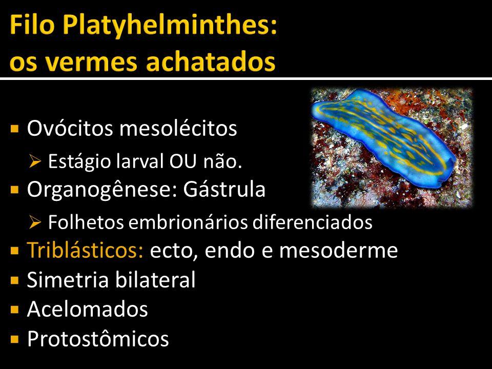  Ovócitos mesolécitos  Estágio larval OU não.  Organogênese: Gástrula  Folhetos embrionários diferenciados  Triblásticos: ecto, endo e mesoderme