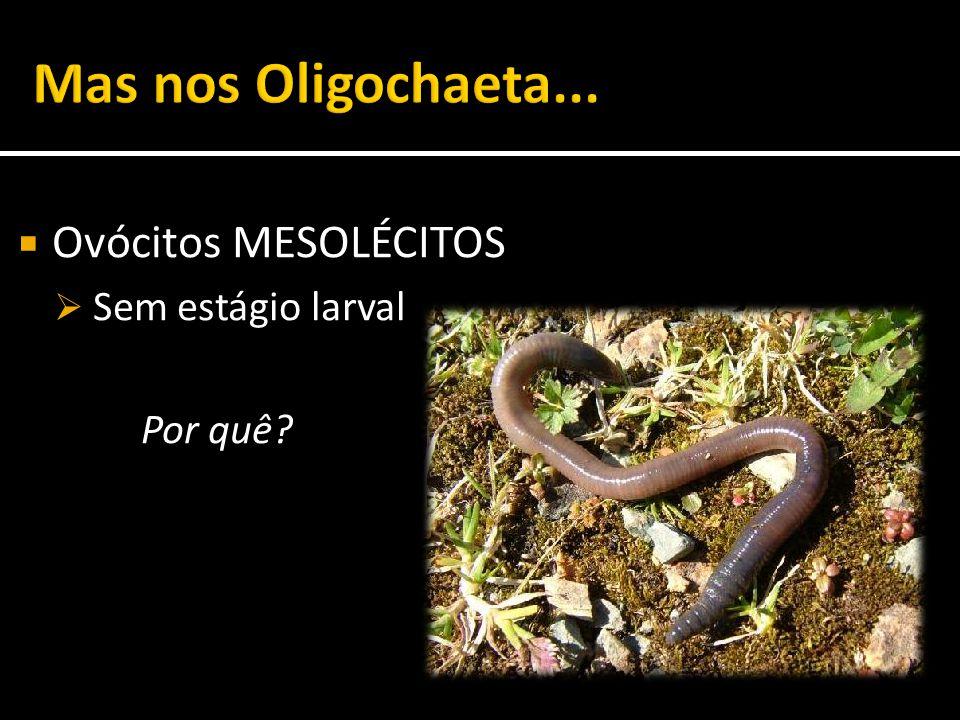  Ovócitos MESOLÉCITOS  Sem estágio larval Por quê?