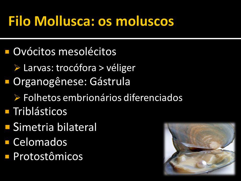  Ovócitos mesolécitos  Larvas: trocófora > véliger  Organogênese: Gástrula  Folhetos embrionários diferenciados  Triblásticos  S imetria bilater