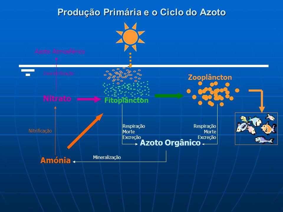 Fitoplâncton Azoto Orgânico Respiração Morte Excreção Nitrificação Amónia Respiração Morte Excreção Zooplâncton Produção Primária e o Ciclo do Azoto Mineralização Desnitrificação Azoto Atmosférico Nitrato