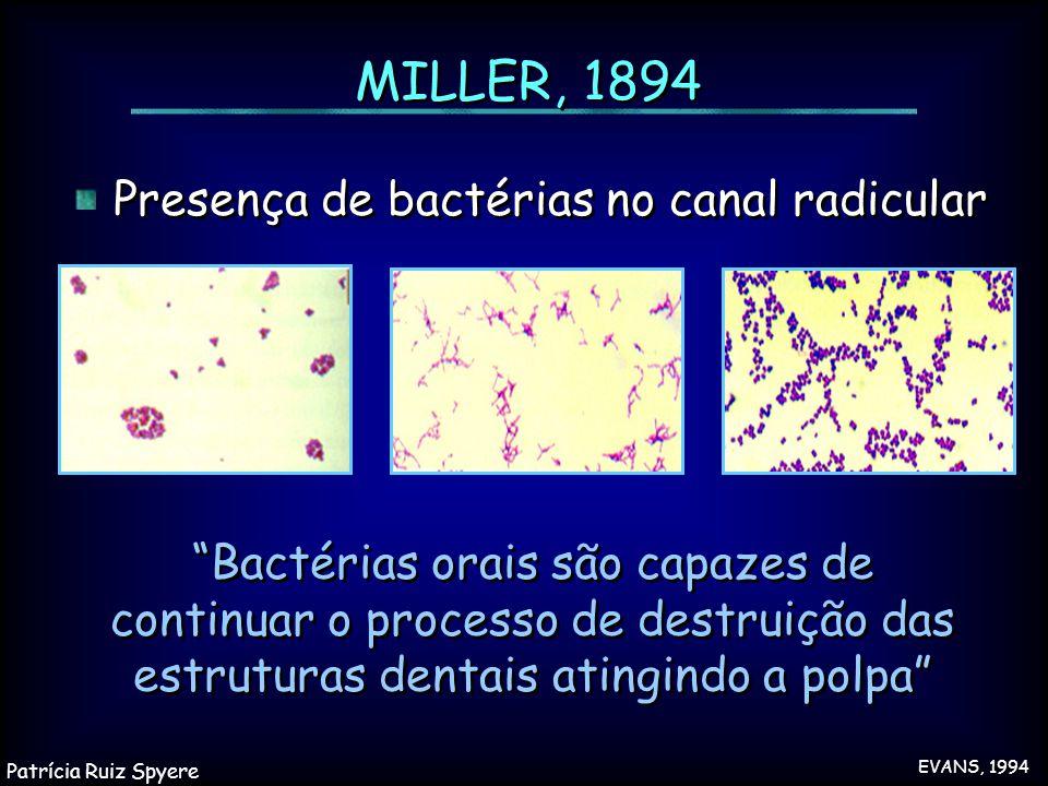 """MILLER, 1894 """"Bactérias orais são capazes de continuar o processo de destruição das estruturas dentais atingindo a polpa"""" Presença de bactérias no can"""