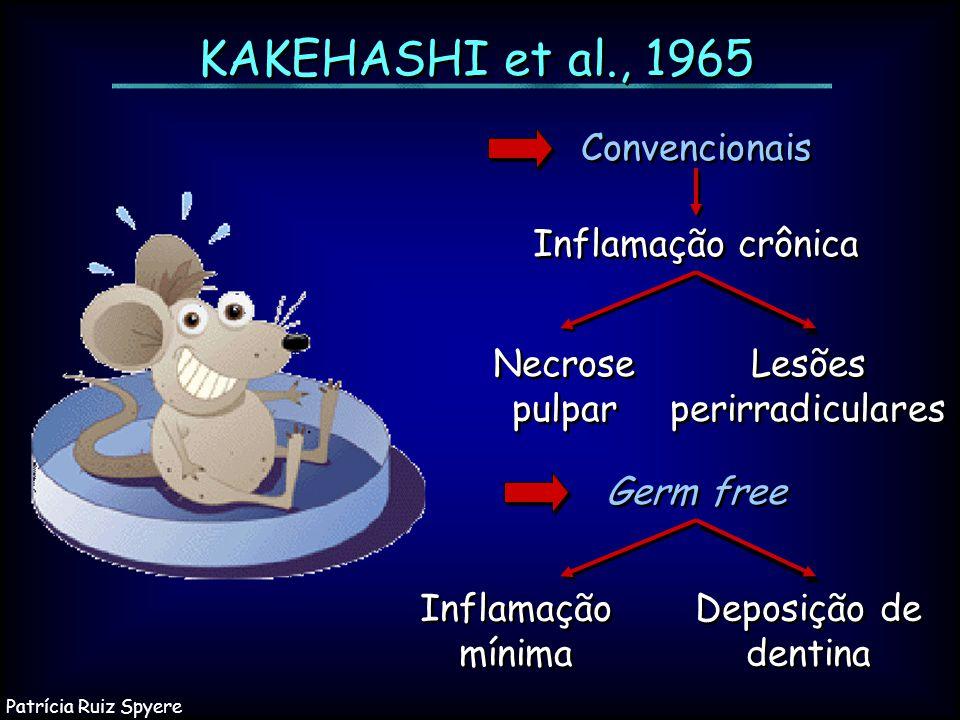 KAKEHASHI et al., 1965 Inflamação crônica Necrose pulpar Lesões perirradiculares Inflamação mínima Deposição de dentina Germ free Convencionais Patríc