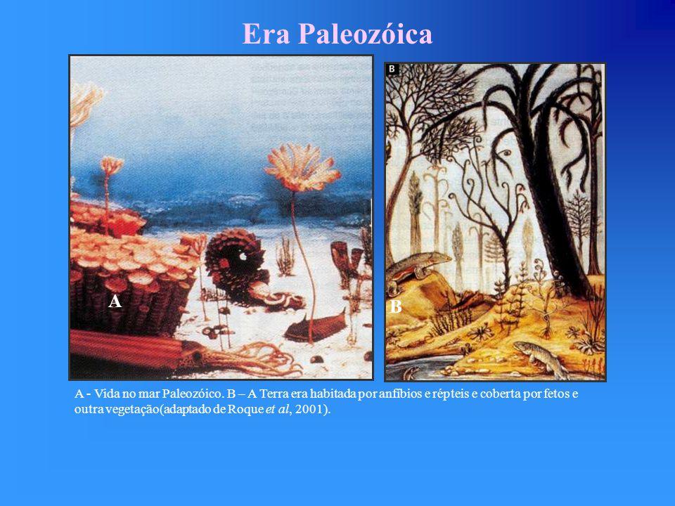 Evolução na Era Paleozóica Era Paleozóica Período Intervalo de Tempo (M.a.) Plantas e Animais Cambriano570 a 505 Mares dominados por gastrópodes, vermes, braquiópodes, trilobites, algas e primeiros vertebrados.