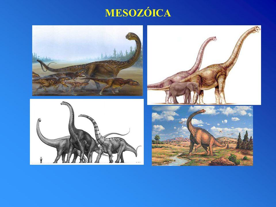 Era Paleozóica A - Vida no mar Paleozóico.
