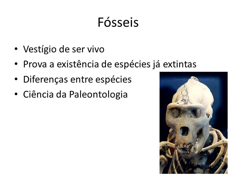 Fósseis Vestígio de ser vivo Prova a existência de espécies já extintas Diferenças entre espécies Ciência da Paleontologia
