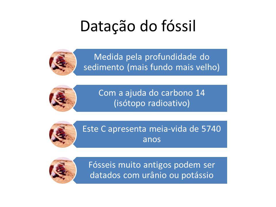 Datação do fóssil Medida pela profundidade do sedimento (mais fundo mais velho) Com a ajuda do carbono 14 (isótopo radioativo) Este C apresenta meia-v