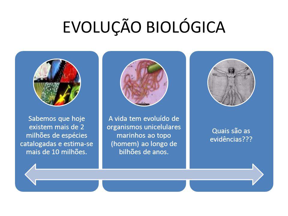 EVOLUÇÃO BIOLÓGICA Sabemos que hoje existem mais de 2 milhões de espécies catalogadas e estima-se mais de 10 milhões. A vida tem evoluído de organismo