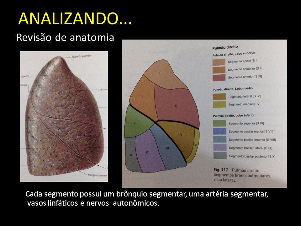 ANALIZANDO... Revisão de anatomia Cada segmento possui um brônquio segmentar, uma artéria segmentar, vasos linfáticos e nervos autonômicos.