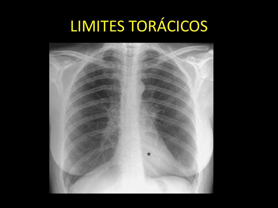 LIMITES TORÁCICOS