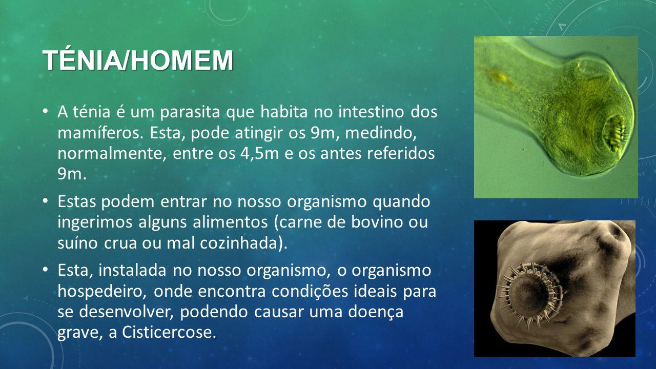 TÉNIA/HOMEM A ténia é um parasita que habita no intestino dos mamíferos. Esta, pode atingir os 9m, medindo, normalmente, entre os 4,5m e os antes refe
